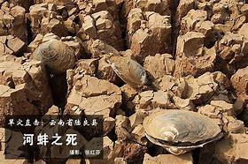 施甸县新闻网 的图像结果