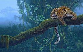 Predator美洲豹 的图像结果