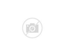 上海市育才初级中学 的图像结果