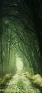 Forest, Wallpaper, 4k, Path, Fall, Calm, Green, 5k, Nature, 524