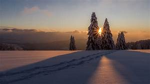 Snow, Covered, Pine, Trees, On, Snow, Field, During, Sunset, Hd, Nature, Wallpapers