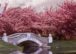 Japan, Wallpaper, Nature, Japan, Blossom, Cherry, Bridge, River, Dove