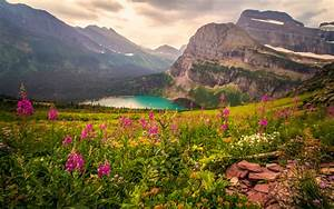 Glacier, National, Park, Usa, Awesome, Place, Rocky, Mountain, Lake, Meadow, With, Planar, Flowers, Green