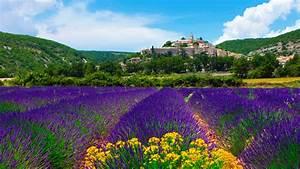 lavender, field, in, provence, france, wallpaper, for, desktop, 1920x1080, full, hd