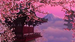 Cherry, Blossom, Backgrounds, 76, Images
