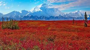 Hd, Wallpaper, Sunset, Mountain, Flowers, Rainier, National, Park, Washington, United, States, Wallpaper