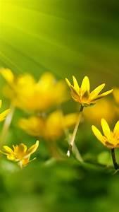 Wallpaper, Flowers, 5k, 4k, Wallpaper, 8k, Sunray, Yellow, Green, Grass, Nature, 4658