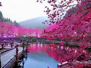 Pink, Color, Lake, Trees, Bridge, Hd, Wallpaper, 000213, Wallpapers13, Com